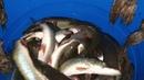 Запуск 600 кг щуки в VIP-2 акваторию в Рыболовной Усадьбе «ЗОЛОТЫЕ КАРАСИ» - 06 ноября 2020 год