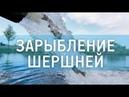 ЧЦЗ занялся зарыблением Шершневского водохранилища