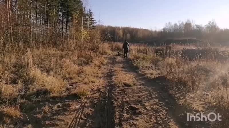 Октябрь Келпи Руна Ягд Смоки и бигль Ларс