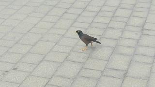Bird in Dubai Marina