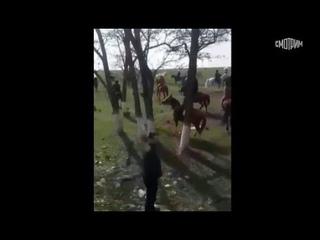 В Дагестане появились около 30 всадников из Чечни