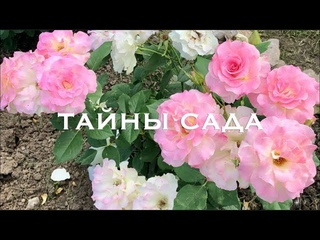 Цветение роз от Елены Иващенко.Часть 1