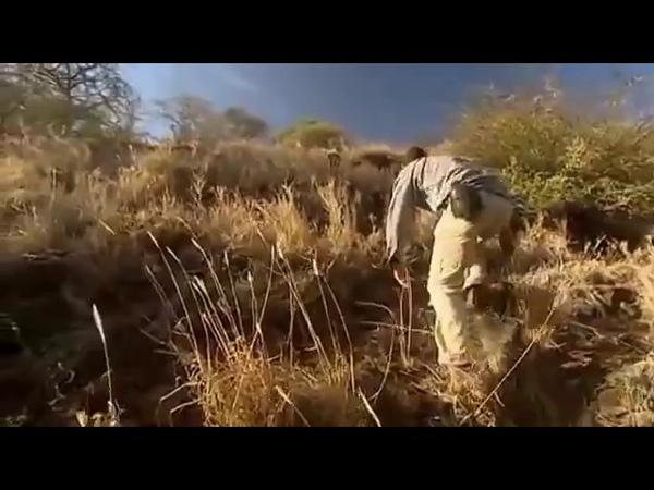 Выжить любой ценой 2016 Африканская саванна 7 серия 1 сезон