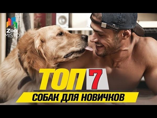 Топ 7 собак для новичков Top 7 dogs for beginners