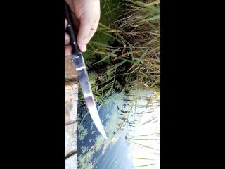Нож филейный Осетр