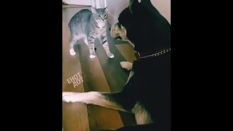 У котов влепить оплеуху ДЕЛО ЧЕСТИ