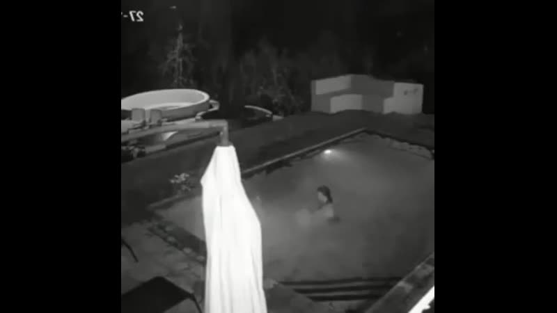 Аллигатор напал на купающихся в бассейне