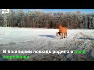 Родился жеребёнок в Башкирии