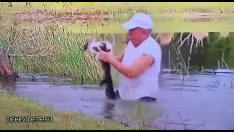 Спас щенка от аллигатора