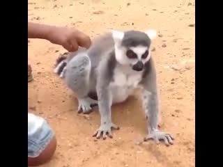 Животные приколисты