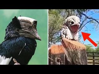 Вот вы стрёмные! Какие то странные эти экзотические птицы.