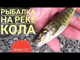 РЫБАЛКА на КОЛЬСКОМ / СЁМГА, которую ловили, но не поймали/ МУРМАНСК/ КОЛА, УЧАСТОК №1/ Июнь 2021
