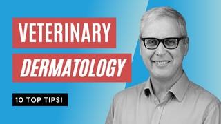 10 советов по ветеринарной дерматологии, которые нужно знать / Veterinary Dermatology 10 TOP TIPS you NEED to Know