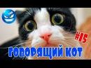 Это Видео Потрясло Весь Мир! Говорящий кот.