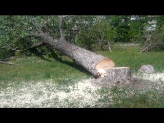 Депутати і братки розказують, що без дерев буде краще