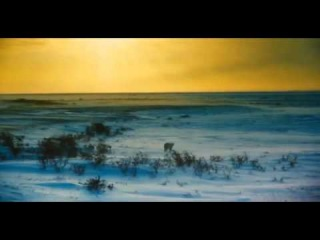 Трейлер Арктика IMAX 3D