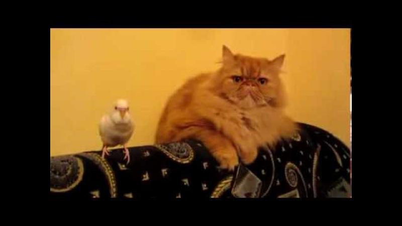 Попугай издевается над котом как хочет