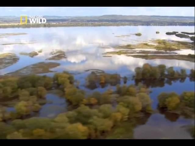 Жизнь орлов на Миссисипи из фильма Дикая природа Миссисипи Холода