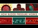 How blood pressure works Wilfred Manzano