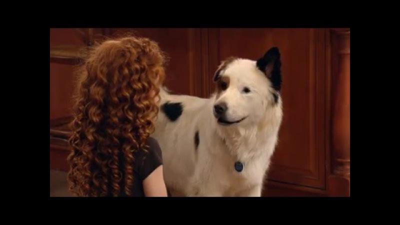 Собака точка ком Сезон 2 Серия 12