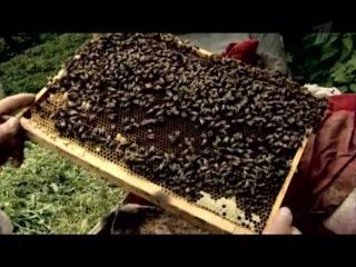 Среда обитания - Сладкая жизнь. Как найти «правильный» мед, сделанный из пыльцы, а не из сахара?