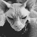Личный фотоальбом Salvador Dali
