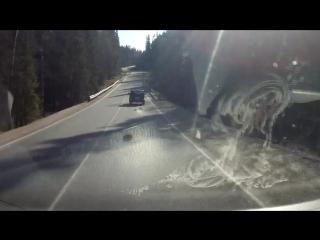 72-летний живодёр Анатолий Свободов привязал к машине пса