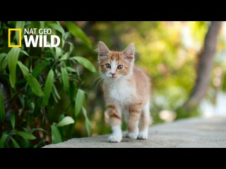 National Geographic Documentary Wild - The Wonderful World of Cats - BBC Documentary History