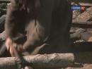 Хождение по мукам (9 серия из 13) 1974-1977 - 2.mp4