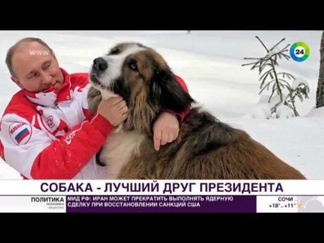 Алабай Верный и другие сколько собак на псарне Путина МИР24