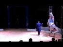 цирк братьев Гертнер (арабский скакун)