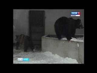 В Липецкий зоопарк приехали два медвежонка