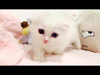 White Fluffy Kitten Ball