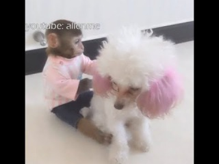 The little monkey played with the puppy, they get along well