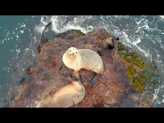 Морские котики See Lion KinoMama КиноМама