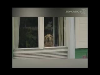 Собака покидает хозяина только один раз
