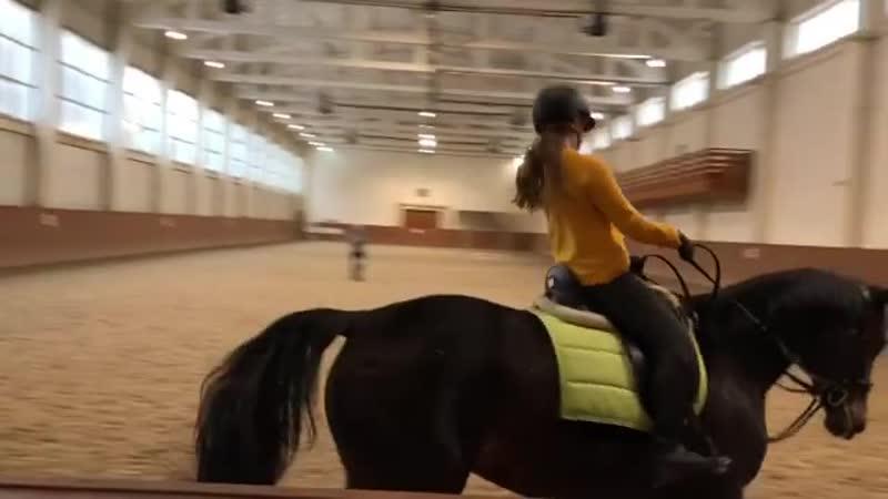 All abut horses