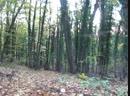В темно-синем лесу