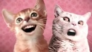 ПРИКОЛ С ПОЮЩИМИ КОТАМИ! Приколы про кошек. Ржака до слёз