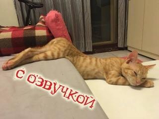 Приколы с котами – СМЕШНАЯ ОЗВУЧКА ЖИВОТНЫХ – Самое смешное видео в мире от DOMI SHOW