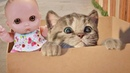 Куклы Пупсики Играют в Игру как мультик МАЛЕНЬКИЙ КОТЕНОК. Видео для детей. Зырики ТВ