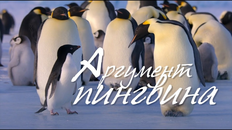 Доказательство Бога Аргумент пингвина о Даниил Сысоев