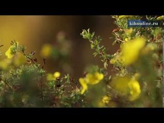 Осенняя видеозарисовка про красивую осень.