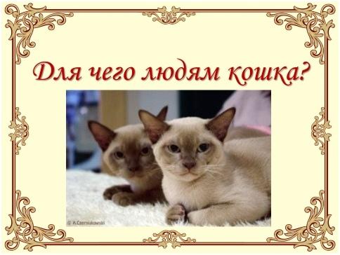 Урок доброты «Эти удивительные кошки», изображение №6