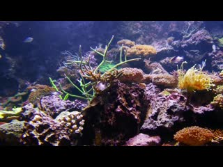 The Best  Aquarium for Relaxation  Sleep Relax Meditation Music