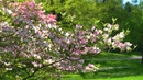 Take a Spring Walk in the Dogwoods