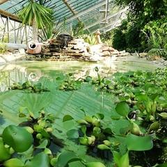 """Волгоградский ботанический сад on Instagram: """"Идеальное место для свадебных фотосессий, просто фотосъёмки семьи... Спокойная обстановка, водопад, м..."""