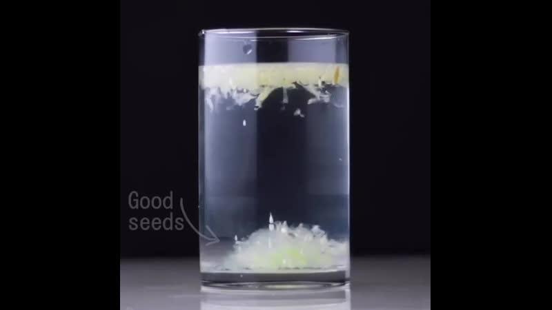 Germination of seeds