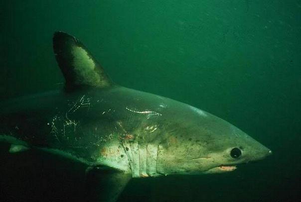 акулы в баренцевом море фото действия фотоаппарата, кто