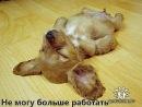Персональный фотоальбом Марии Силуяновой